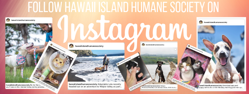 Copy_of_Follow_Hawaii_Island_Humane_Society_on_Facebook