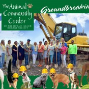 Animal Community Center Progress